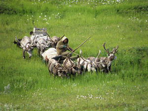 Nenets nomads moving camp by reindeer sledge in the tundra north of Nelmin Nos, Nenets Autonomous Okrug, Arctic Russia